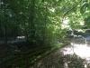 Galeriebild 1 Blick in den Wald