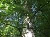 Galeriebild 10 Blick in eine Baumkrone