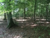 Galeriebild 11 Blick in den Wald