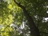 Galeriebild 12 Blick in eine Baumkrone