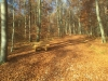 Galeriebild 16 Blick in den Wald