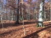 Galeriebild 17 Blick in den Wald