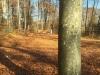 Galeriebild 19 Blick in den Wald