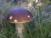 Galeriebild 2 Blick auf einen Pilz