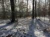 Galeriebild 20 Blick in den Wald