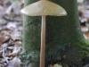 Galeriebild 25 Blick auf einen Pilz