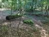 Galeriebild 7 Blick in den Wald