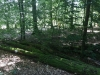 Galeriebild 9 Blick in den Wald