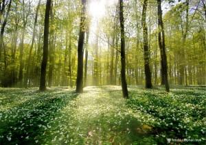 Frühlingswald_1